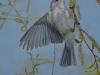 avian-acrobat-warbling-vireoemail-002