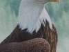 Forest Watchman, Bald Eagle