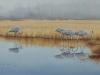 Lake Erie Wetlands