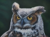 Owl's Gaze, Great Horned Owl