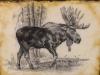 Striding Moose