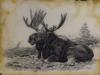 Reclining Moose