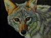 While E Coyote
