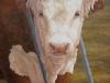 Herford Bull