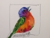 painted-bunting-iv