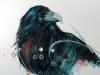 Medicine Bird