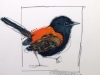 red-backed-fairywren