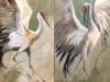 Cranes diptych