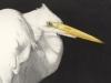 great-egret-at-rest-web