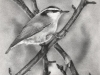 nuthatch-apple-twigs-web