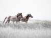 Better Things Ahead, Spanish Wild Mustang Series