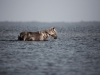 Life Begins, Spanish Wild Mustang Series